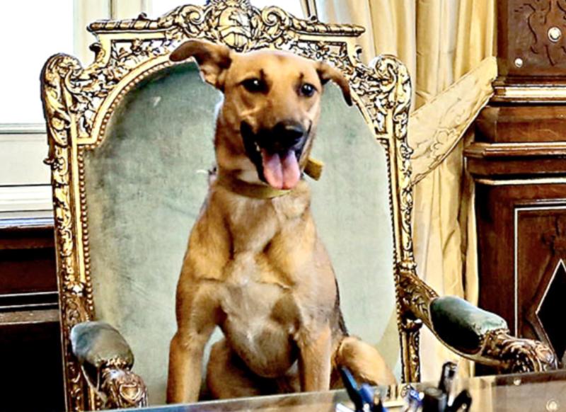 Balcarce, el perro PRO, visitó la Casa Rosada